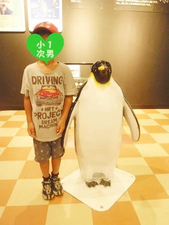 P8072858白浜ペンギン